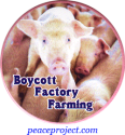 Boycott Factory Farming - Button