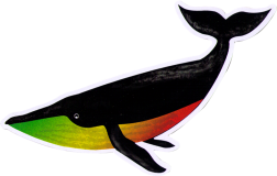 "Rasta Whale - Small Bumper Sticker / Decal (6"" X 2.5"")"