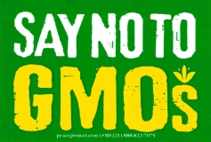 "Say No to GMOs - Small Bumper Sticker / Decal (4"" X 2.75"")"