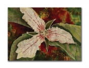 Trillium - Holiday Cards