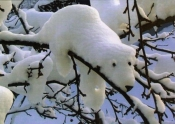 Snow Bear - Holiday Card